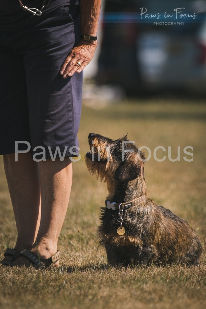 Andover Obedience Show 2018-10