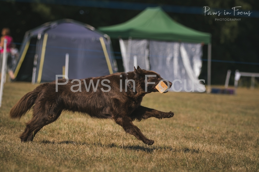 Andover Obedience Show 2018-19