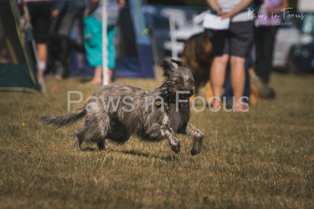 Andover Obedience Show 2018-21