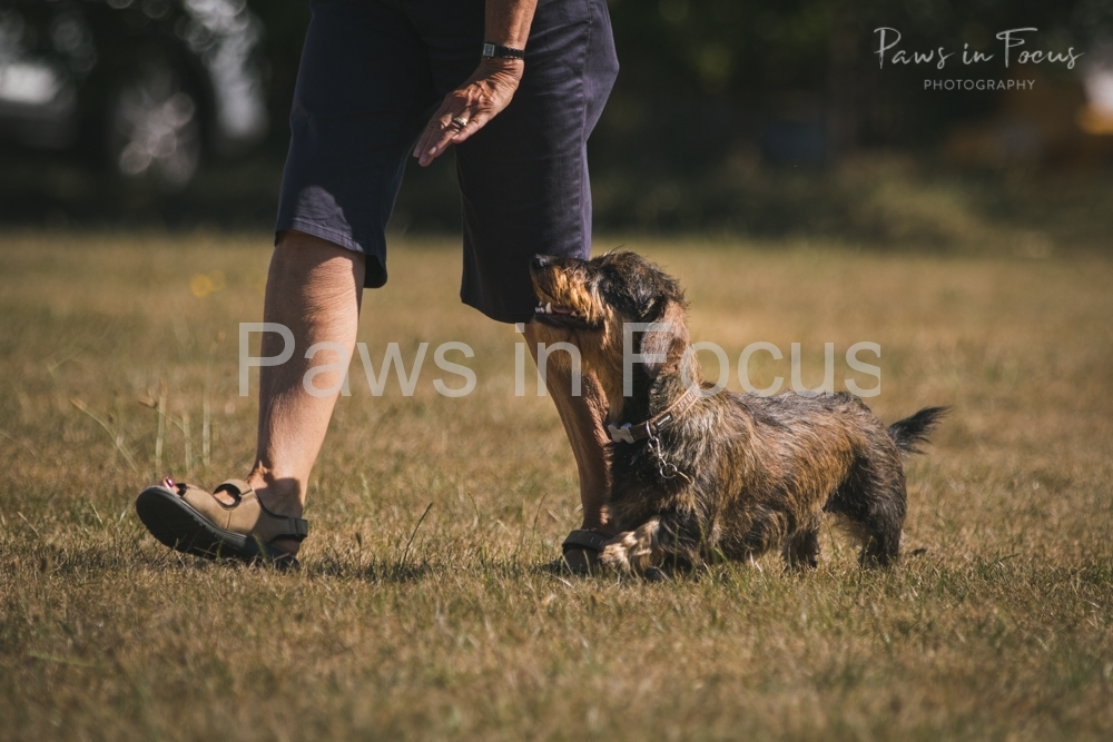 Andover Obedience Show 2018-9