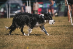 Andover Obedience Show 2018-11