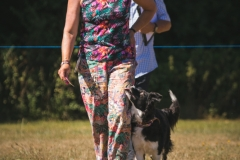 Andover Obedience Show 2018-27
