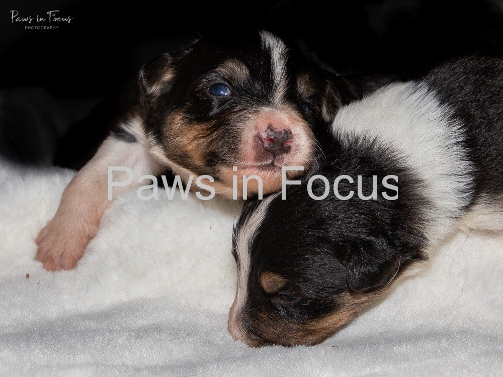 Beckys-pups-2-weeks-1