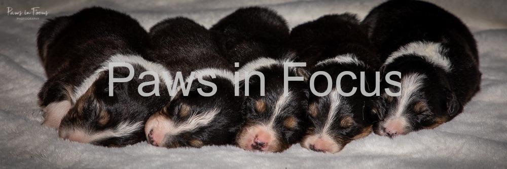 Beckys-pups-2-weeks-11