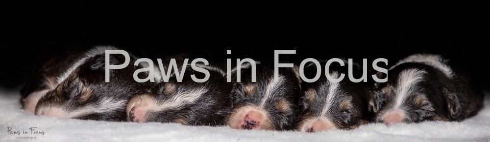Beckys-pups-2-weeks-12