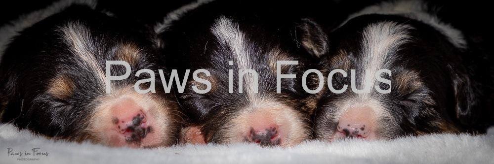 Beckys-pups-2-weeks-14