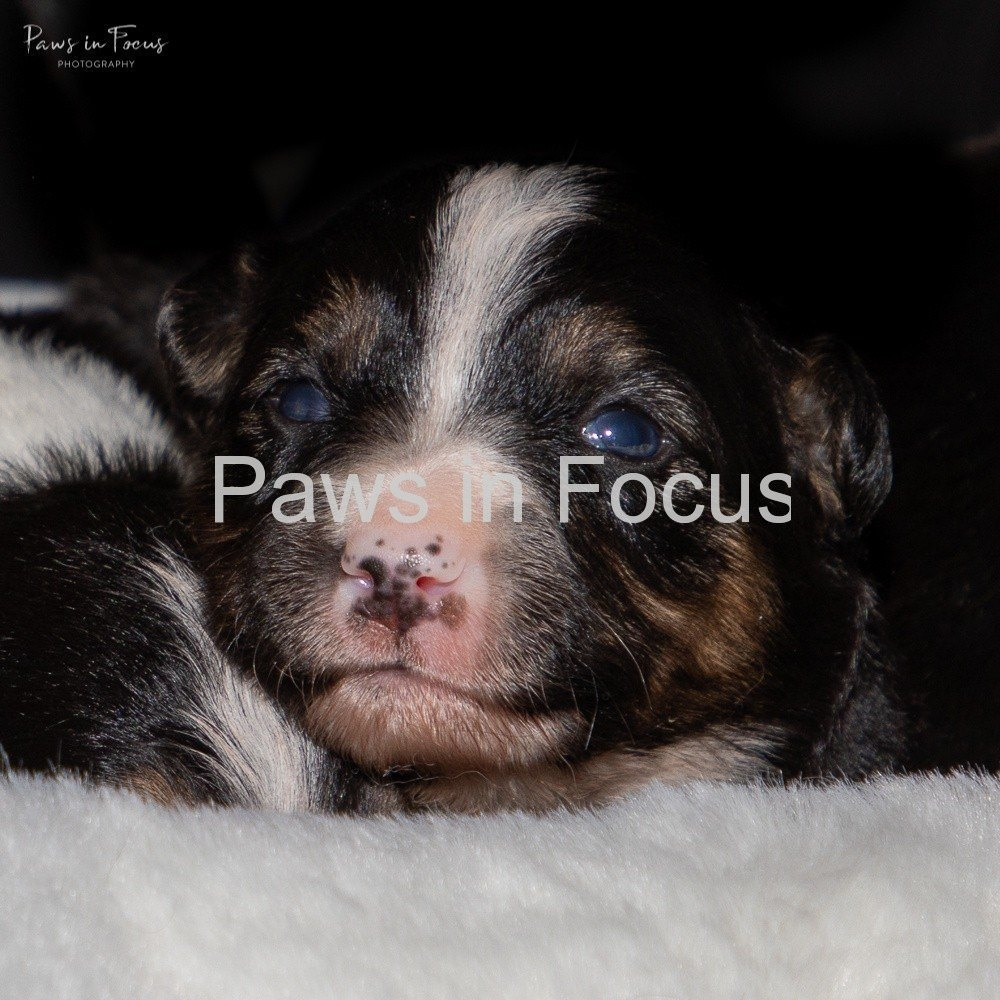Beckys-pups-2-weeks-2