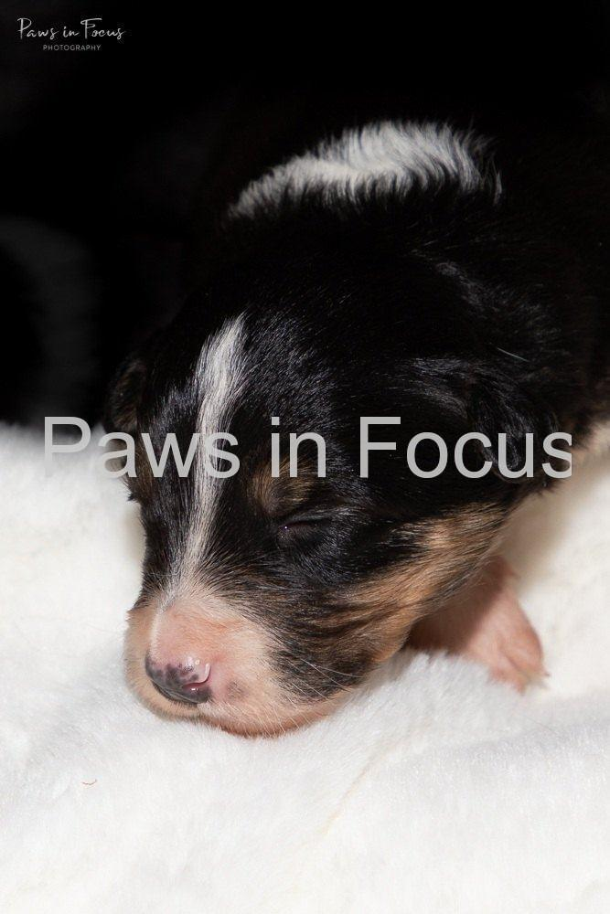 Beckys-pups-2-weeks-3