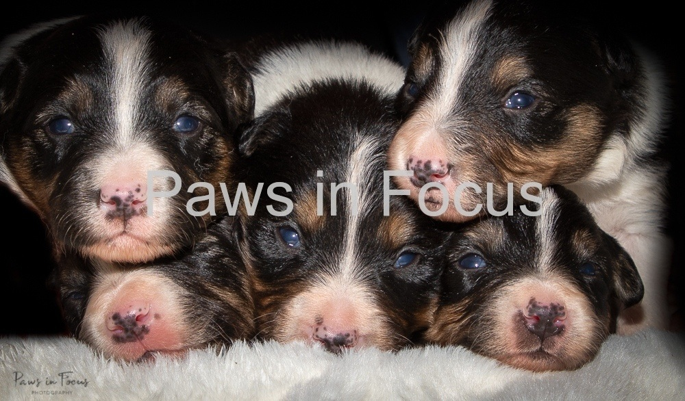 Beckys-pups-2-weeks-5