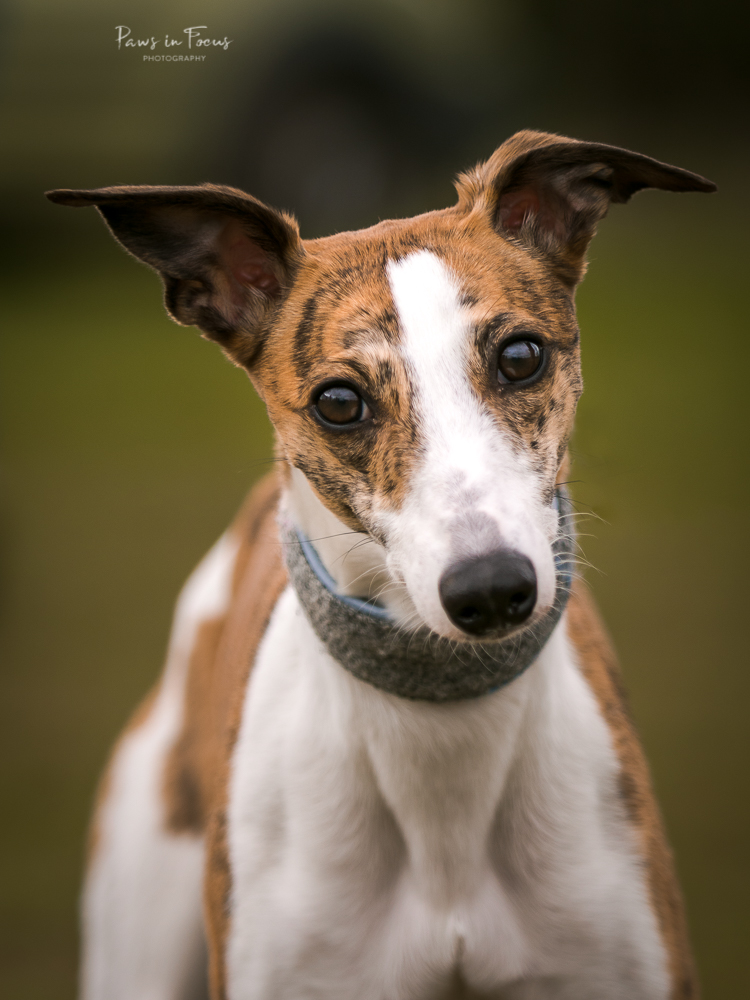 Andover-District-Whippet-racing-010418-5-Edit