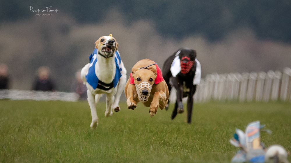 Andover-District-Whippet-racing-010418-58