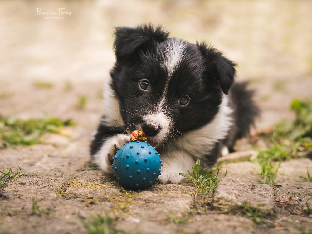 Beckys-Pups-18