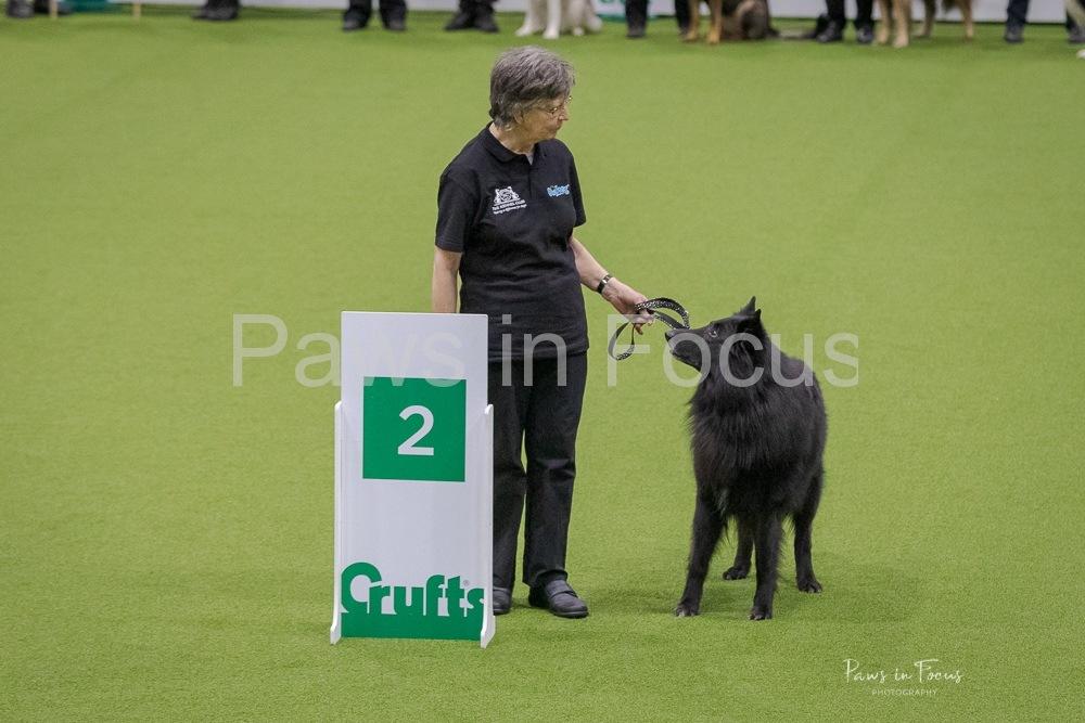 2020-Crufts-561